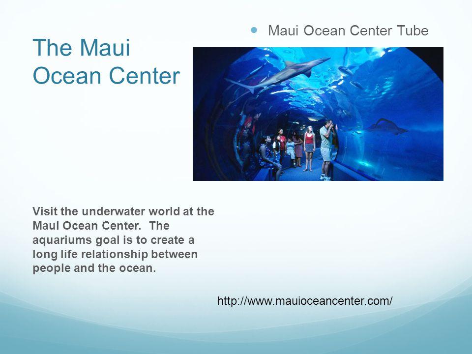 The Maui Ocean Center Maui Ocean Center Tube Visit the underwater world at the Maui Ocean Center.