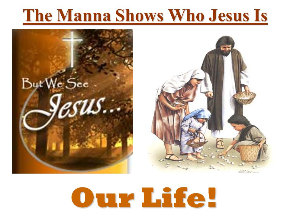 The Manna Shows Who Jesus Is Our Life!