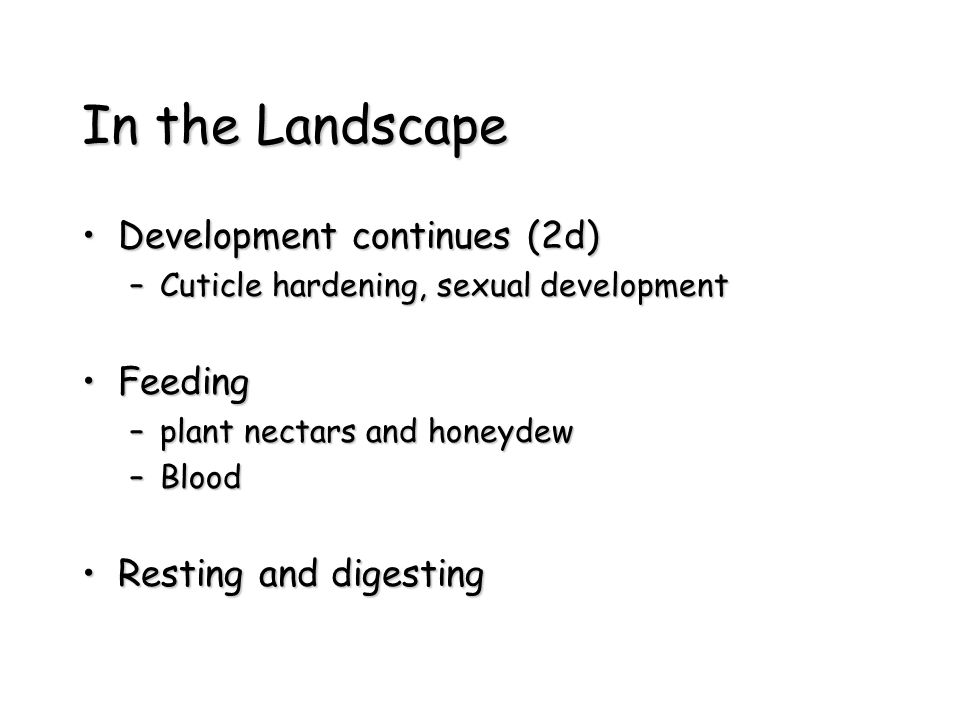 In the Landscape Development continues (2d)Development continues (2d) –Cuticle hardening, sexual development FeedingFeeding –plant nectars and honeydew –Blood Resting and digestingResting and digesting