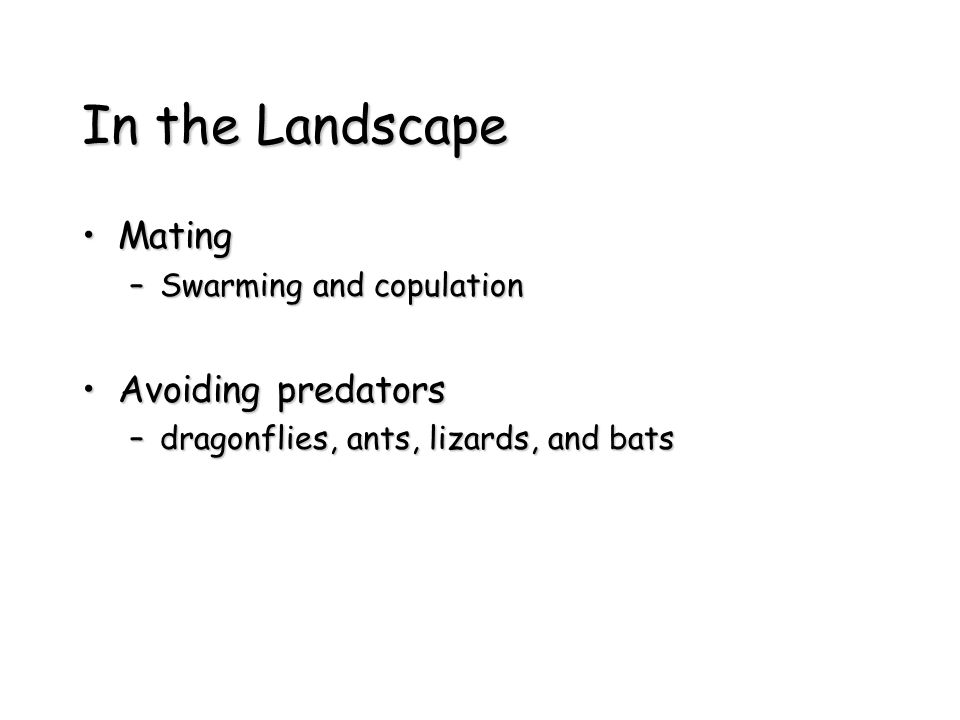 In the Landscape MatingMating –Swarming and copulation Avoiding predatorsAvoiding predators –dragonflies, ants, lizards, and bats
