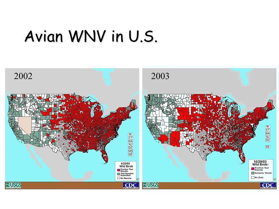Avian WNV in U.S. 20022003