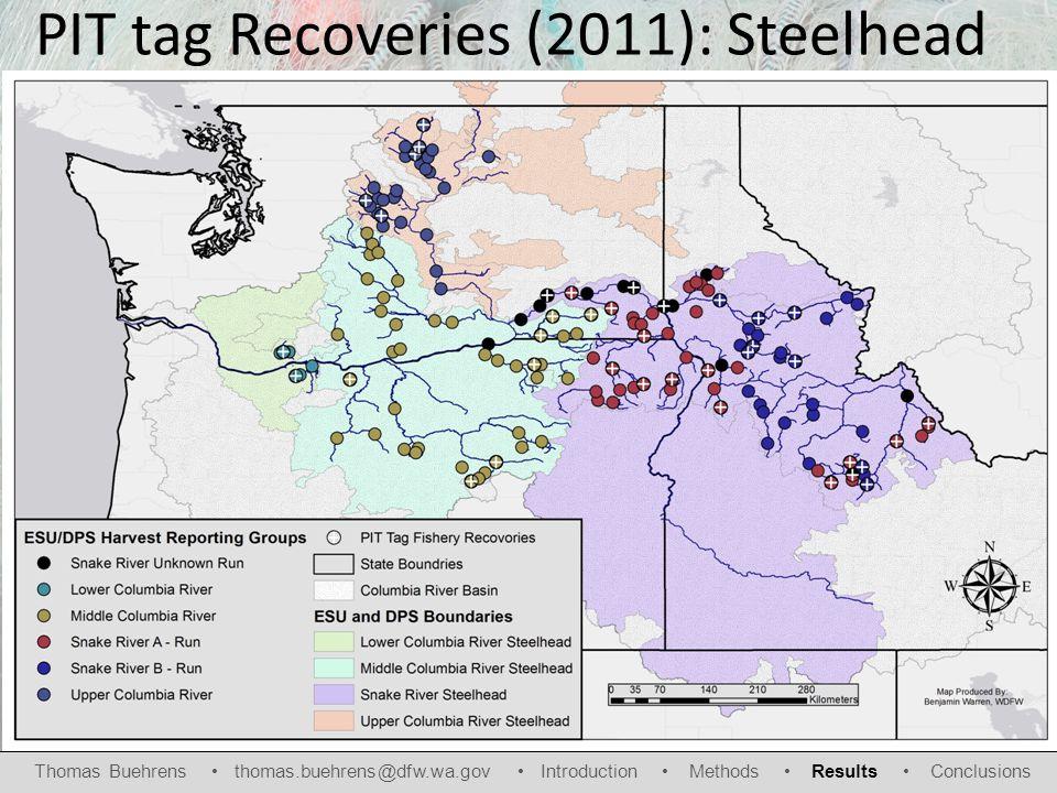 PIT tag Recoveries (2011): Steelhead Thomas Buehrens thomas.buehrens@dfw.wa.gov Introduction Methods Results Conclusions