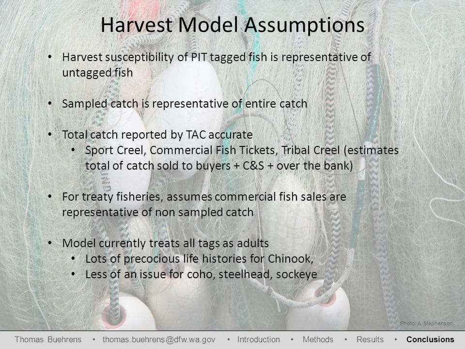 Harvest Model Assumptions Harvest susceptibility of PIT tagged fish is representative of untagged fish Sampled catch is representative of entire catch Total catch reported by TAC accurate Sport Creel, Commercial Fish Tickets, Tribal Creel (estimates total of catch sold to buyers + C&S + over the bank) For treaty fisheries, assumes commercial fish sales are representative of non sampled catch Model currently treats all tags as adults Lots of precocious life histories for Chinook, Less of an issue for coho, steelhead, sockeye Photo: A.