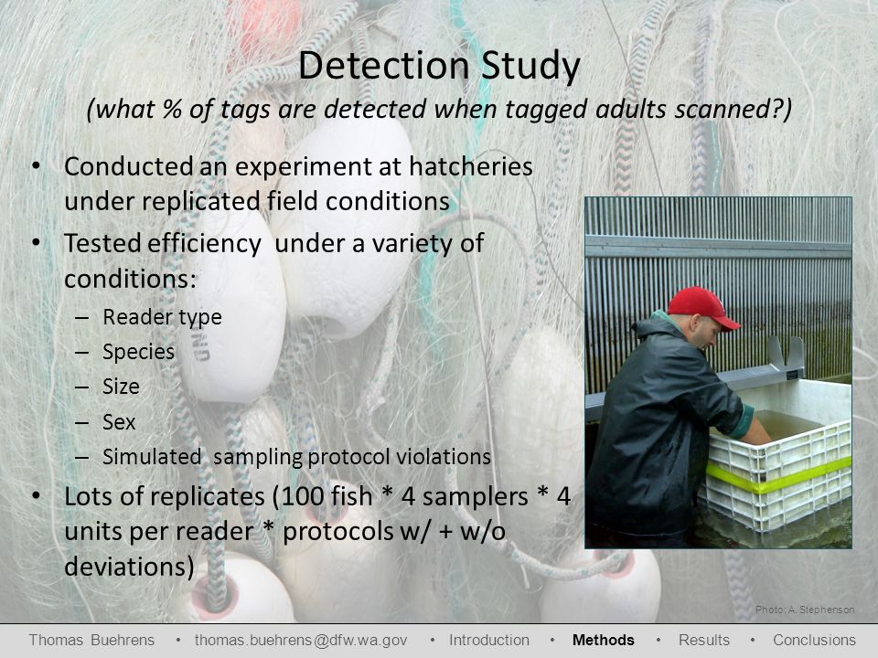 Detection Study (what % of tags are detected when tagged adults scanned ) Conducted an experiment at hatcheries under replicated field conditions Tested efficiency under a variety of conditions: – Reader type – Species – Size – Sex – Simulated sampling protocol violations Lots of replicates (100 fish * 4 samplers * 4 units per reader * protocols w/ + w/o deviations) Thomas Buehrens thomas.buehrens@dfw.wa.gov Introduction Methods Results Conclusions Photo: A.