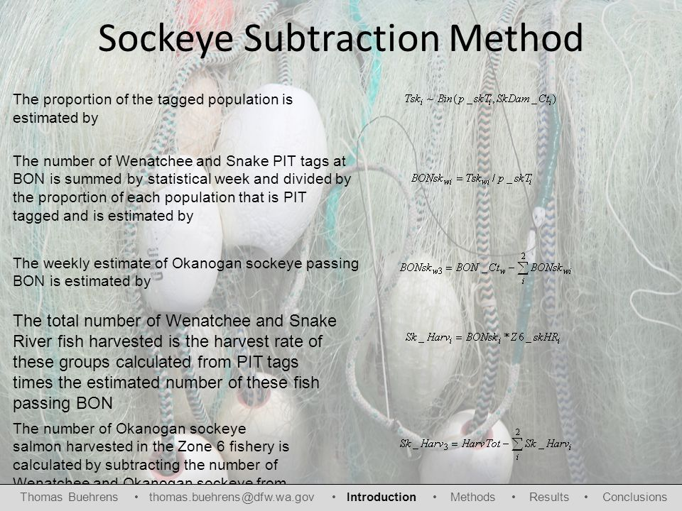 Sockeye Subtraction Method The proportion of the tagged population is estimated by The number of Wenatchee and Snake PIT tags at BON is summed by statistical week and divided by the proportion of each population that is PIT tagged and is estimated by The weekly estimate of Okanogan sockeye passing BON is estimated by The total number of Wenatchee and Snake River fish harvested is the harvest rate of these groups calculated from PIT tags times the estimated number of these fish passing BON The number of Okanogan sockeye salmon harvested in the Zone 6 fishery is calculated by subtracting the number of Wenatchee and Okanogan sockeye from the total Zone 6 catch Thomas Buehrens thomas.buehrens@dfw.wa.gov Introduction Methods Results Conclusions