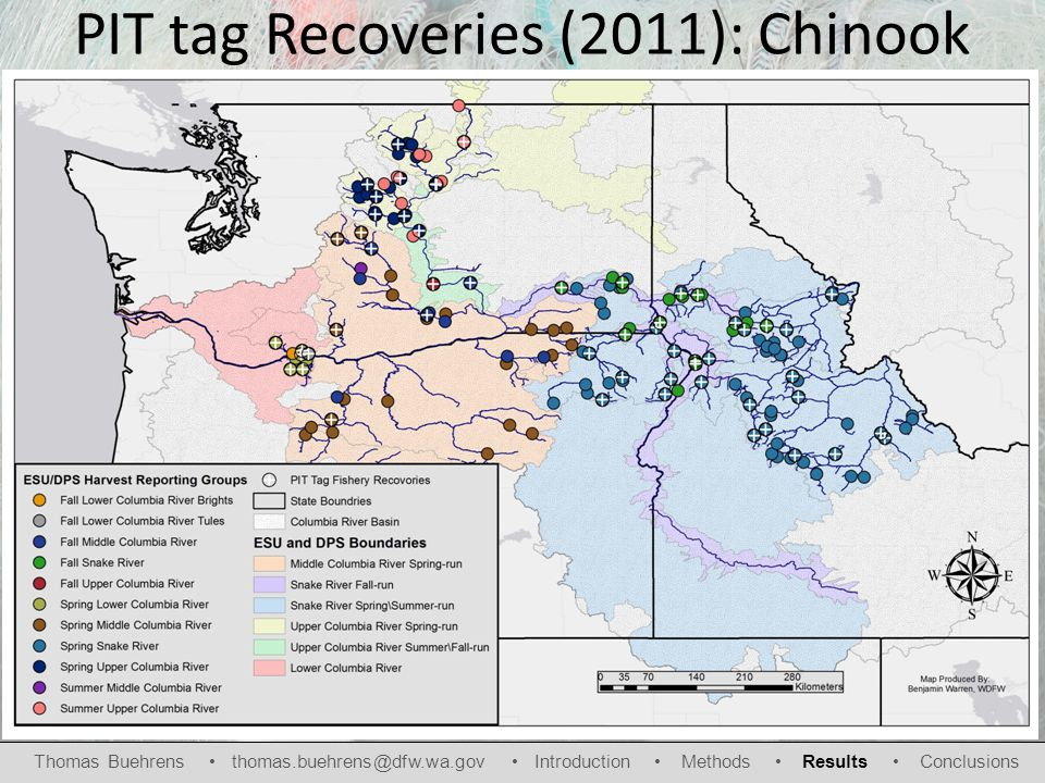 PIT tag Recoveries (2011): Chinook Thomas Buehrens thomas.buehrens@dfw.wa.gov Introduction Methods Results Conclusions