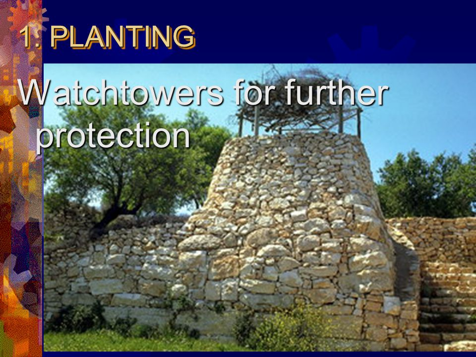  Hillsides are suited location  Stone walls around for protection 1. PLANTING