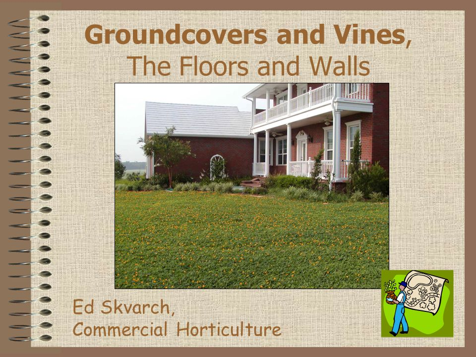 Groundcovers and Vines, The Floors and Walls Ed Skvarch, Commercial Horticulture