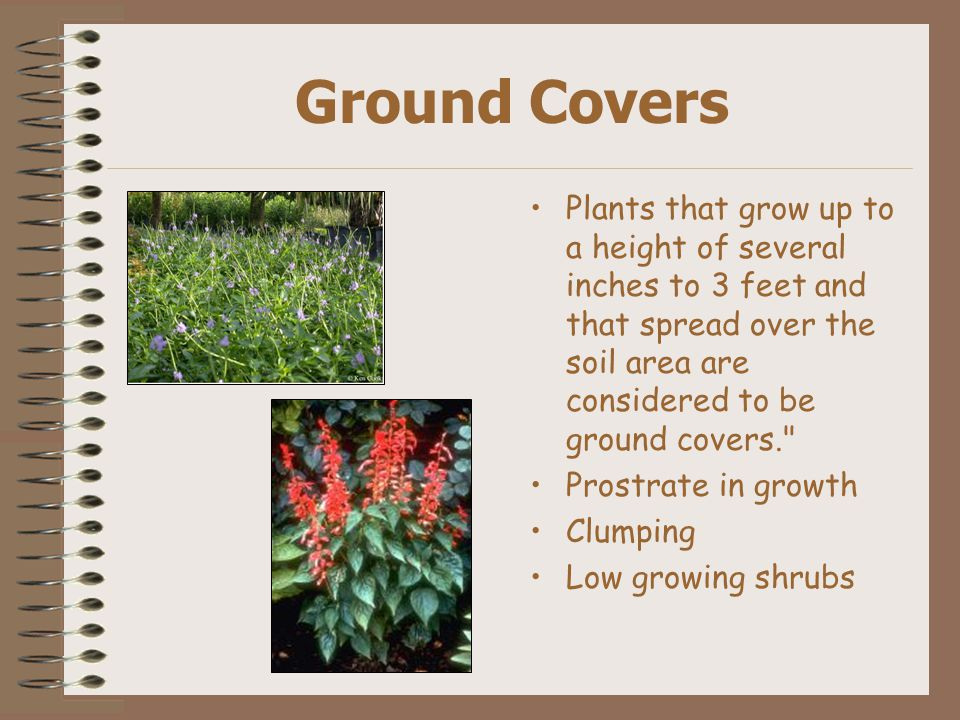 Ground Covers Plants that grow up to a height of several inches to 3 feet and that spread over the soil area are considered to be ground covers. Prostrate in growth Clumping Low growing shrubs