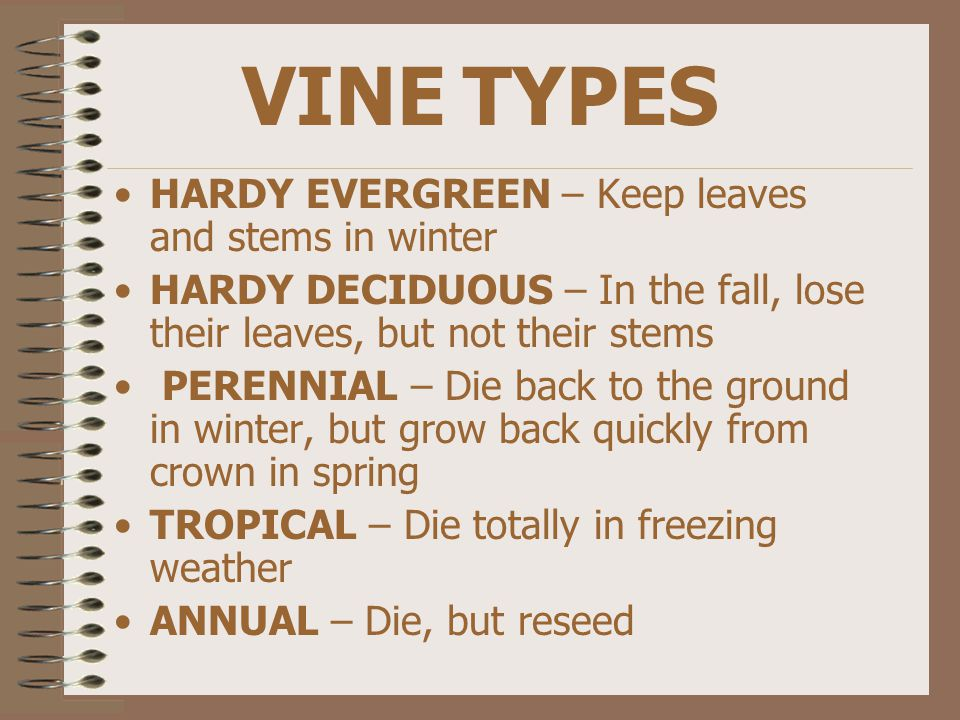 VINE TYPES HARDY EVERGREEN – Keep leaves and stems in winter HARDY DECIDUOUS – In the fall, lose their leaves, but not their stems PERENNIAL – Die back to the ground in winter, but grow back quickly from crown in spring TROPICAL – Die totally in freezing weather ANNUAL – Die, but reseed