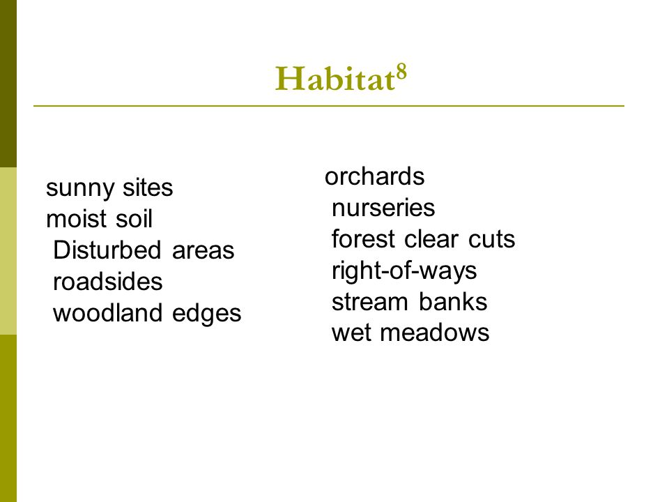 Habitat 8 orchards nurseries forest clear cuts right-of-ways stream banks wet meadows sunny sites moist soil Disturbed areas roadsides woodland edges