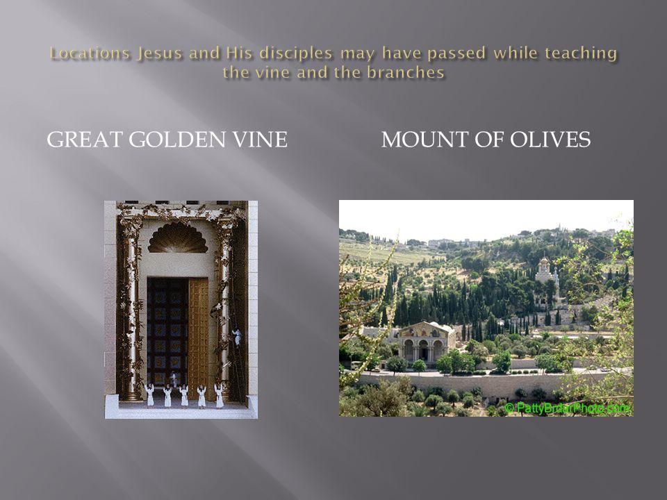 GREAT GOLDEN VINEMOUNT OF OLIVES