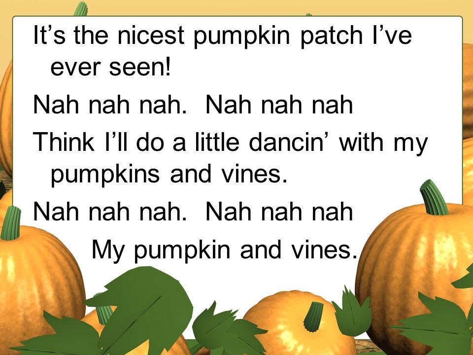 It's the nicest pumpkin patch I've ever seen.Nah nah nah.