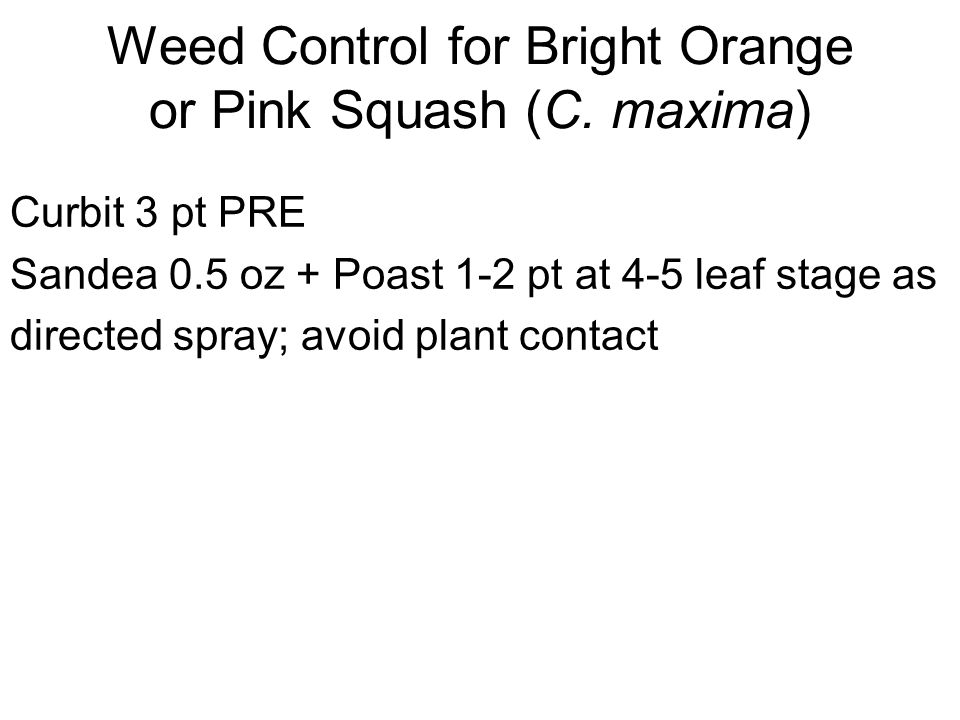 Weed Control for Bright Orange or Pink Squash (C.