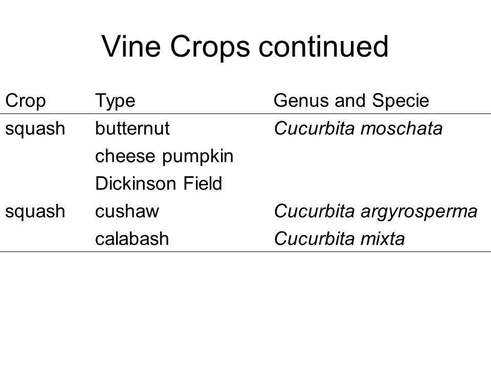Vine Crops continued CropTypeGenus and Specie squashbutternut cheese pumpkin Dickinson Field Cucurbita moschata squashcushaw calabash Cucurbita argyrosperma Cucurbita mixta
