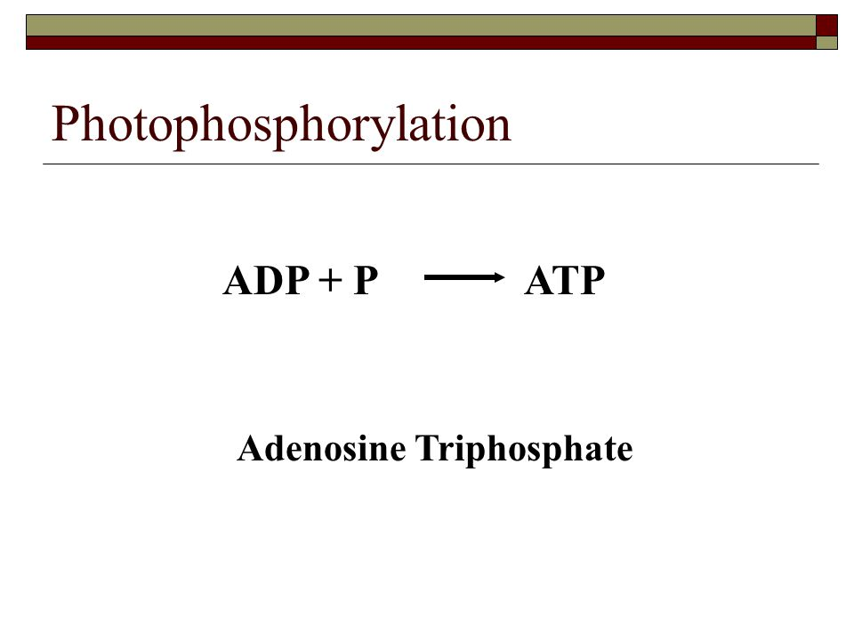 Photophosphorylation ADP + P ATP Adenosine Triphosphate