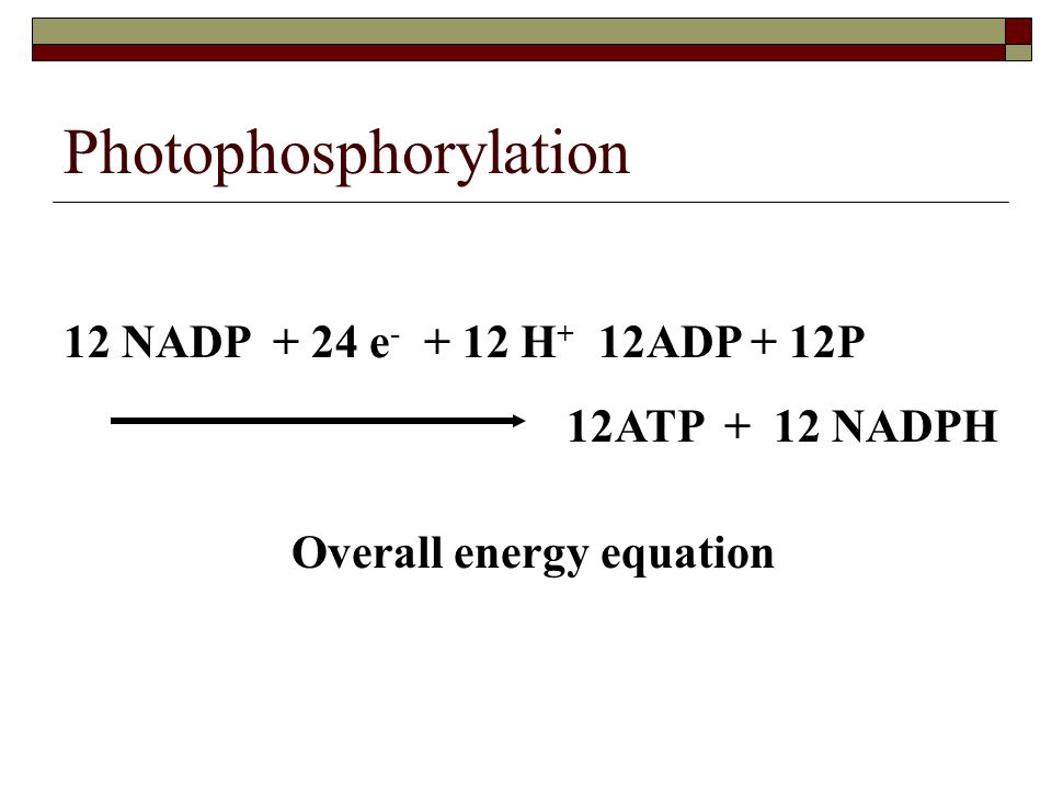 Photophosphorylation 12 NADP + 24 e - + 12 H + 12ADP + 12P 12ATP + 12 NADPH Overall energy equation