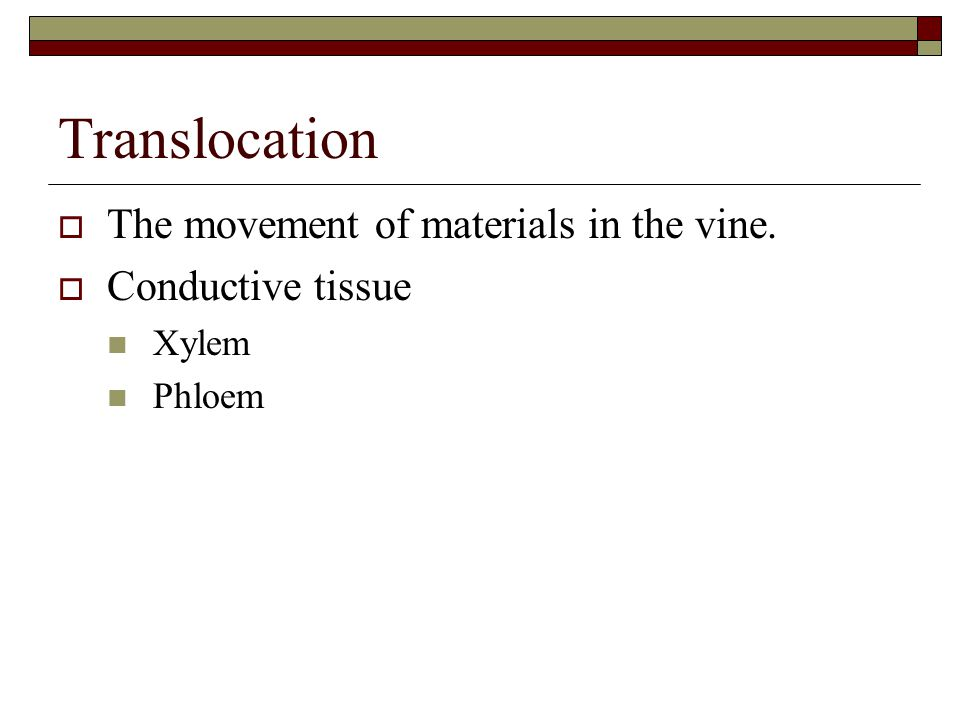Translocation  The movement of materials in the vine.  Conductive tissue Xylem Phloem