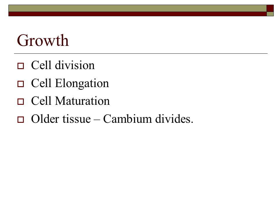 Growth  Cell division  Cell Elongation  Cell Maturation  Older tissue – Cambium divides.