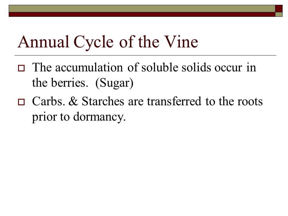 Annual Cycle of the Vine  The accumulation of soluble solids occur in the berries.
