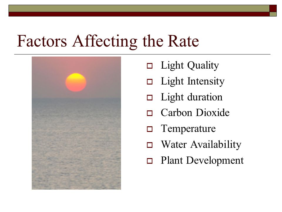 Factors Affecting the Rate  Light Quality  Light Intensity  Light duration  Carbon Dioxide  Temperature  Water Availability  Plant Development