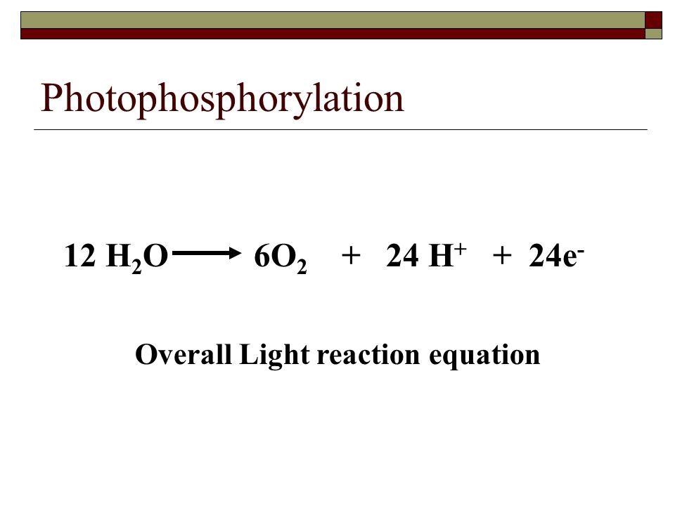 Photophosphorylation 12 H 2 O 6O 2 + 24 H + + 24e - Overall Light reaction equation