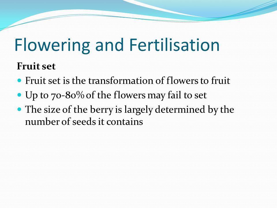 Flowering and Fertilisation Fruit set Fruit set is the transformation of flowers to fruit Up to 70-80% of the flowers may fail to set The size of the
