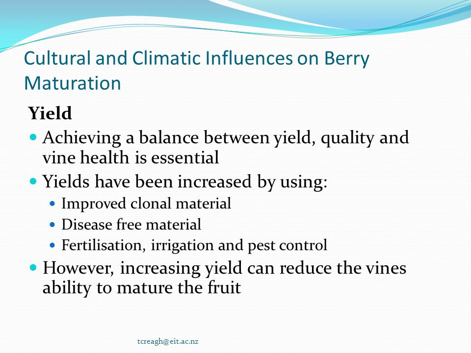 Cultural and Climatic Influences on Berry Maturation Yield Achieving a balance between yield, quality and vine health is essential Yields have been in