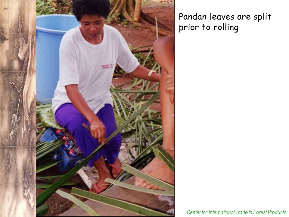 Center for International Trade in Forest Products Pandan leaves are split prior to rolling