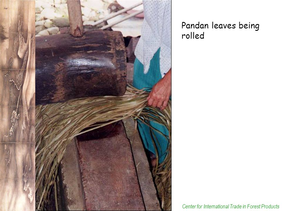 Center for International Trade in Forest Products Pandan leaves being rolled