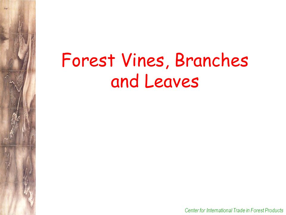 Center for International Trade in Forest Products Forest Vines, Branches and Leaves