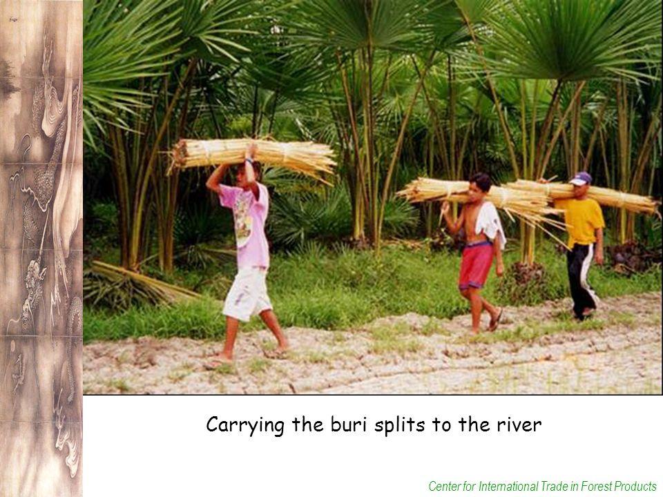 Center for International Trade in Forest Products Carrying the buri splits to the river