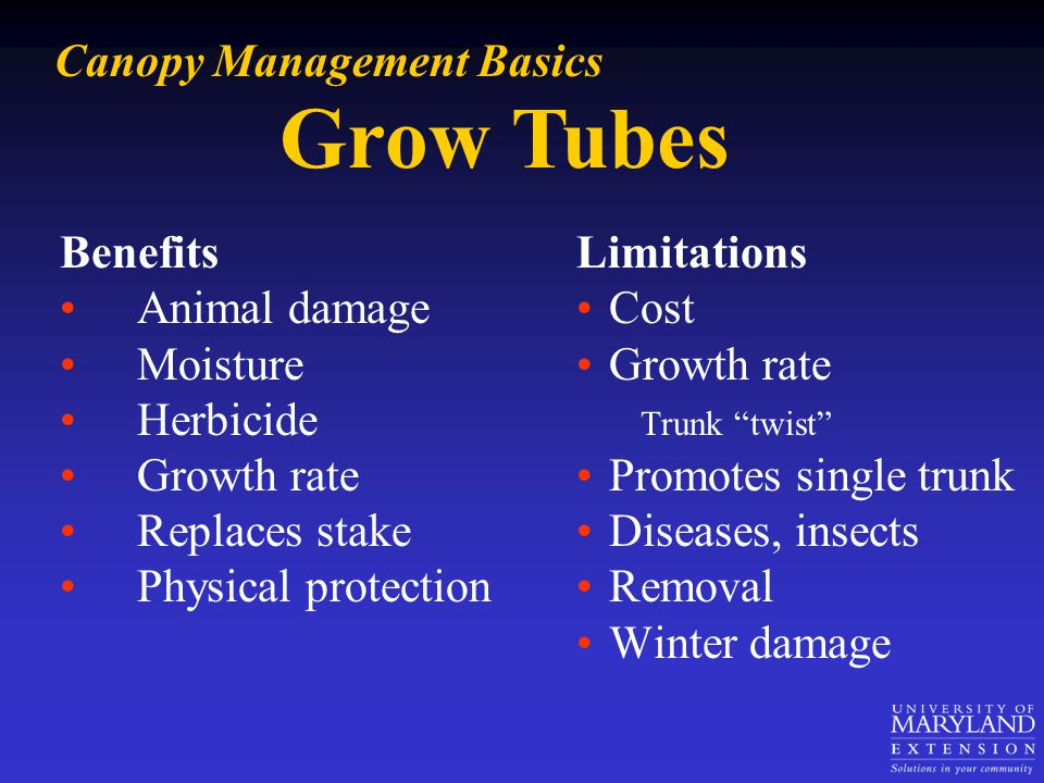 Grow Tubes Benefits Animal damage Moisture Herbicide Growth rate Replaces stake Physical protection Canopy Management Basics Limitations Cost Growth r