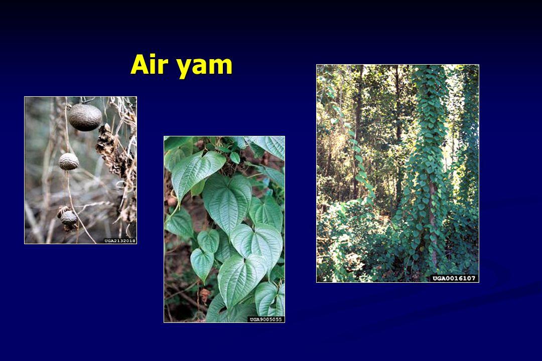 Air yam