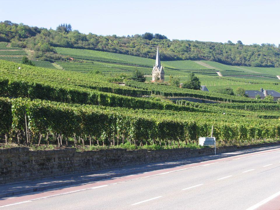 Serge Fischer Institut viti-vinicole