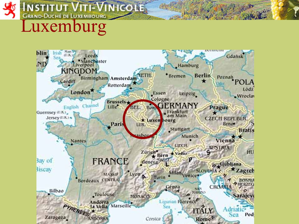 Serge Fischer Institut viti-vinicole Elbling cultivated since Roman times large dense bunches large, egg-shaped grapes ripens medium early Light, fresh wine with a typical acidity which makes it an excellent thirst-quenching wine 9 % of the vineyards