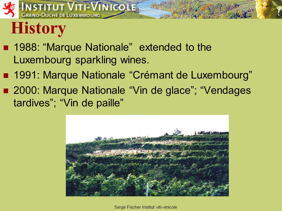 Serge Fischer Institut viti-vinicole Vineyards 1300 ha vineyards, 450 producers The Moselle forms a natural boundary from Luxembourg to Germany between Schengen and Wasserbillig Along these 42 kilometres the height above sea level drops from 142 to 129 metres.