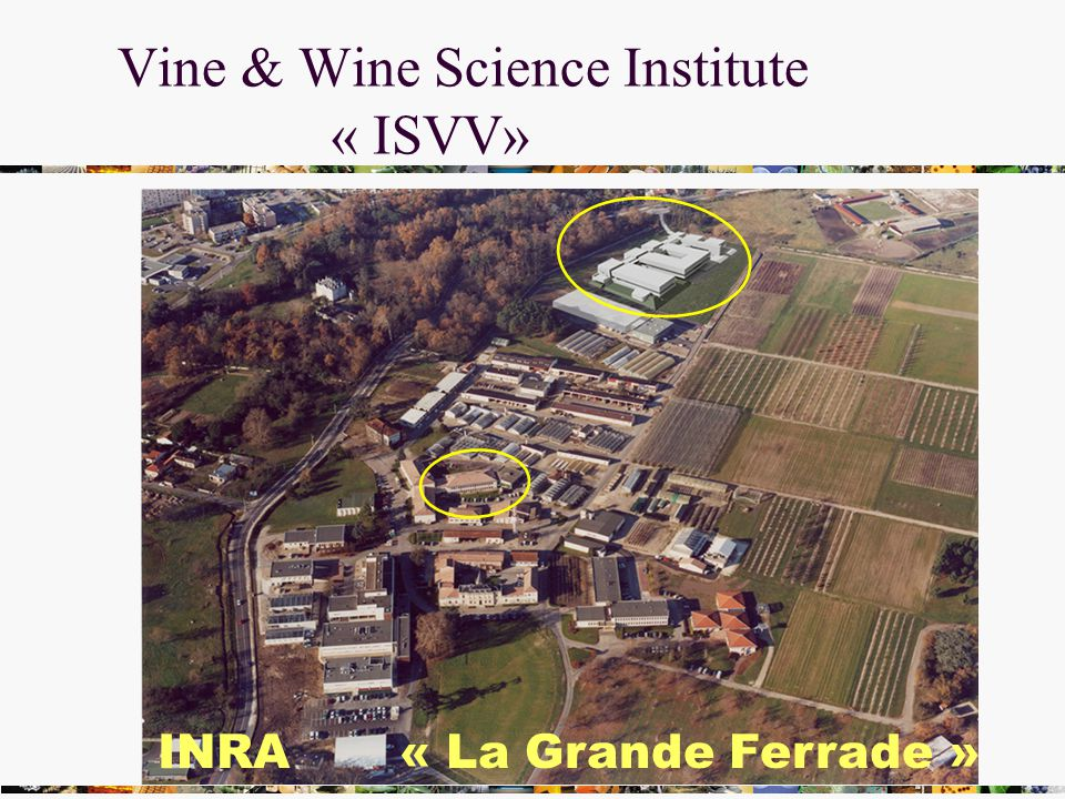 Vine & Wine Science Institute « ISVV» INRA « La Grande Ferrade »