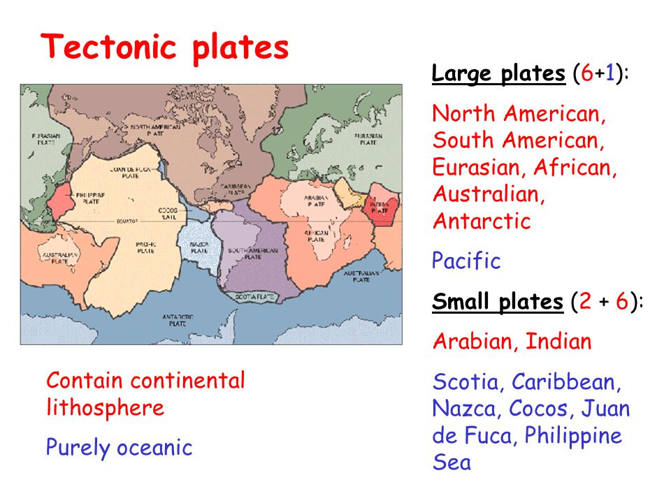 Large plates (6+1): North American, South American, Eurasian, African, Australian, Antarctic Pacific Small plates (2 + 6): Arabian, Indian Scotia, Caribbean, Nazca, Cocos, Juan de Fuca, Philippine Sea Tectonic plates Contain continental lithosphere Purely oceanic