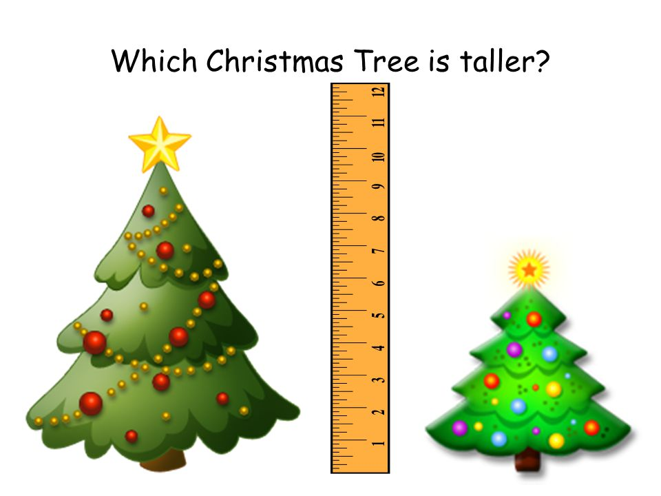 Which Christmas Tree is taller
