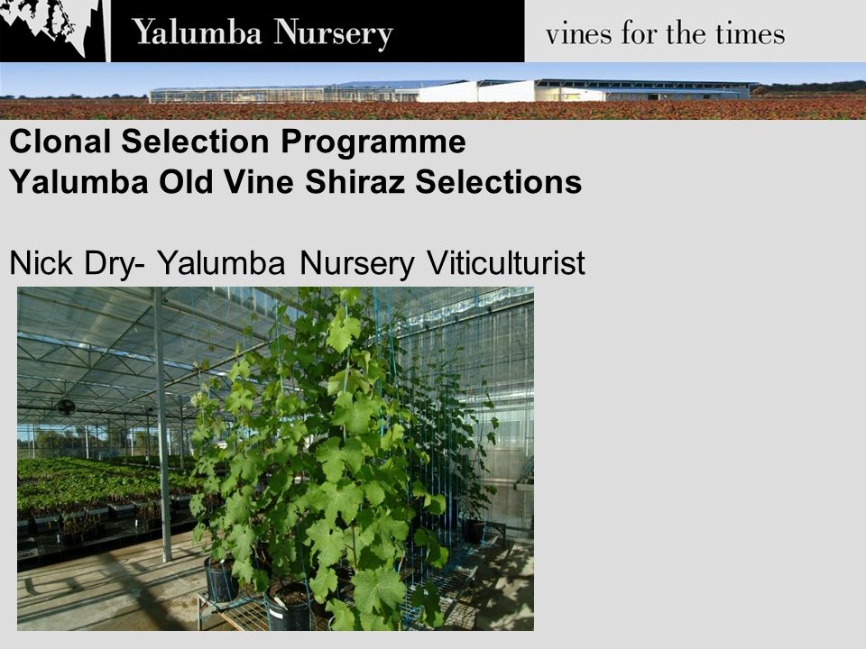 Clonal Selection Programme Yalumba Old Vine Shiraz Selections Nick Dry- Yalumba Nursery Viticulturist