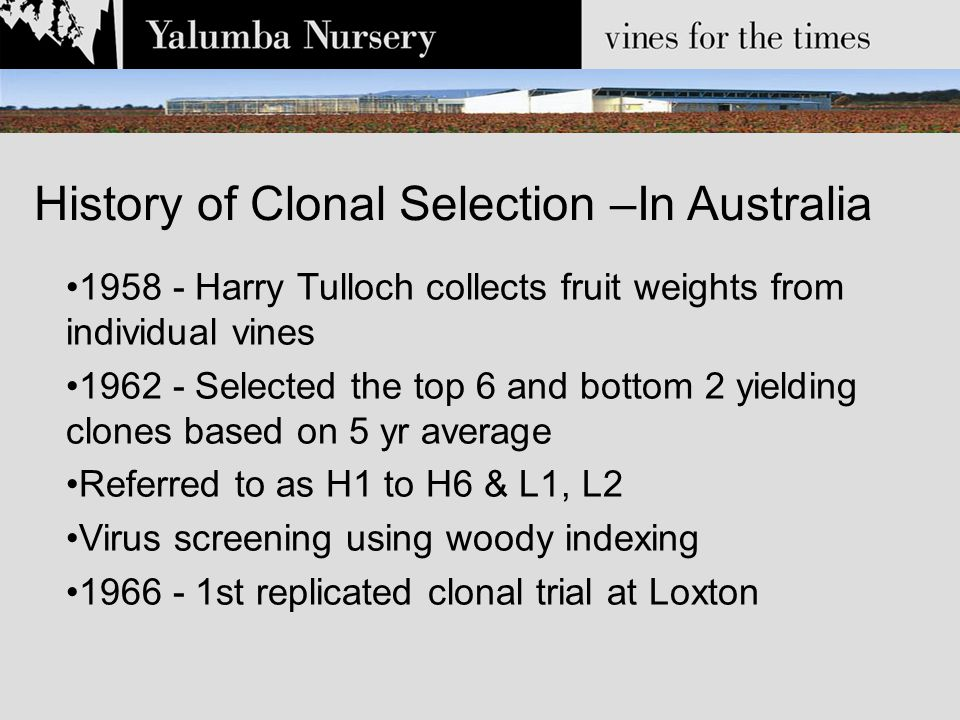 1958 - Harry Tulloch collects fruit weights from individual vines 1962 - Selected the top 6 and bottom 2 yielding clones based on 5 yr average Referred to as H1 to H6 & L1, L2 Virus screening using woody indexing 1966 - 1st replicated clonal trial at Loxton History of Clonal Selection –In Australia