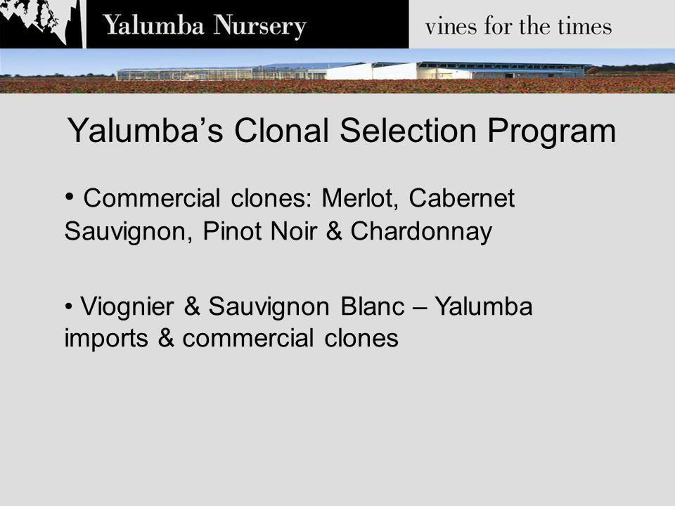 Yalumba's Clonal Selection Program Commercial clones: Merlot, Cabernet Sauvignon, Pinot Noir & Chardonnay Viognier & Sauvignon Blanc – Yalumba imports & commercial clones