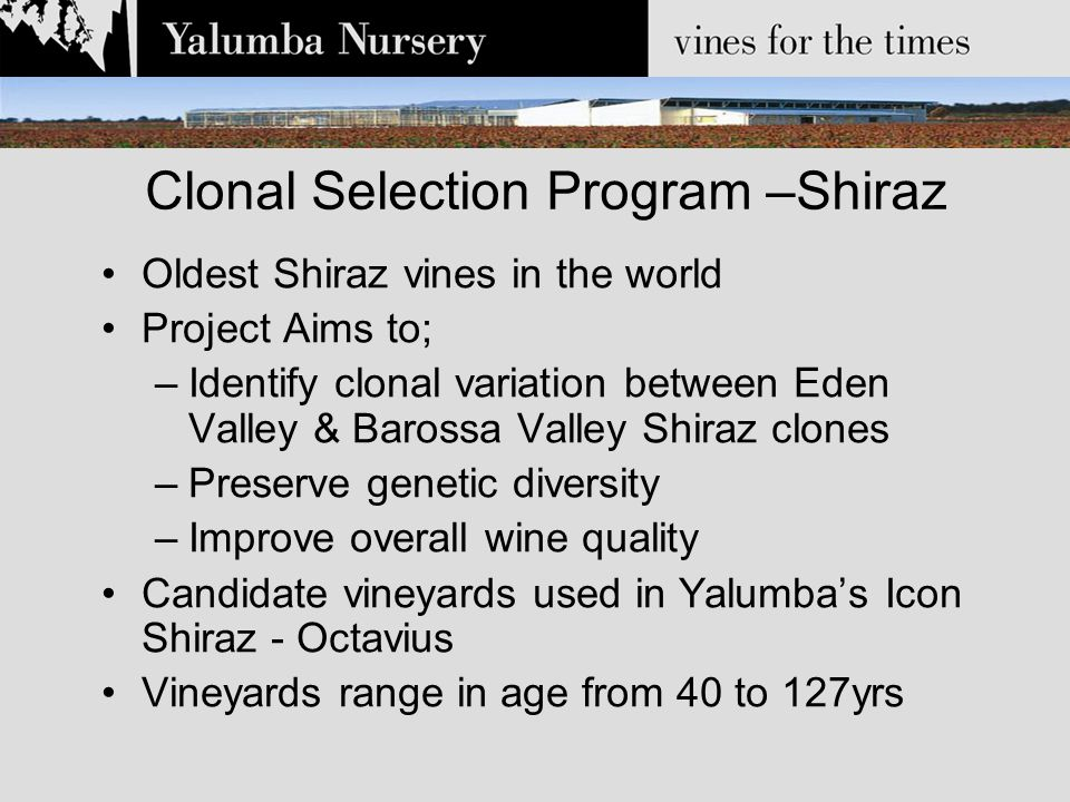 Clonal Selection Program –Shiraz 1999 - 5 Candidate vines selected per vineyard Tested for viral status using PCR Fruit maturity, colour & chemical analysis After 2 yrs a single mother vine is selected Cuttings collected & propagated