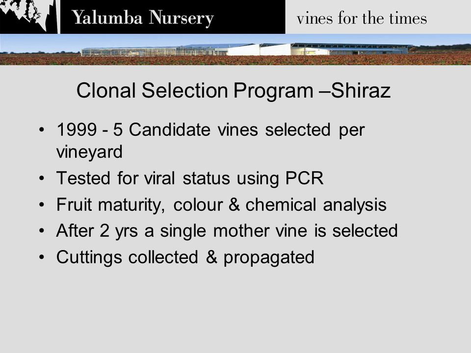 Clonal Selection Program –Shiraz 2001 – Replicated trial planted in commercial vineyard Includes 13 old vine Shiraz clones –7 x Barossa Valley vineyards –6 x Eden Valley vineyards 4 x commercial Shiraz clones 2005 first wines produced