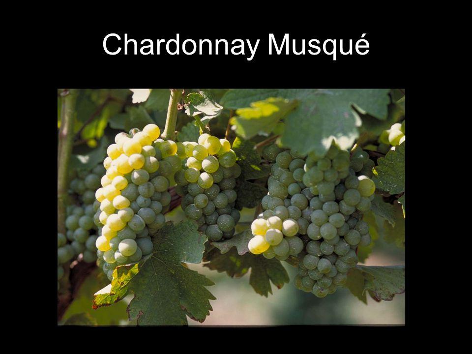 Chardonnay Musqué