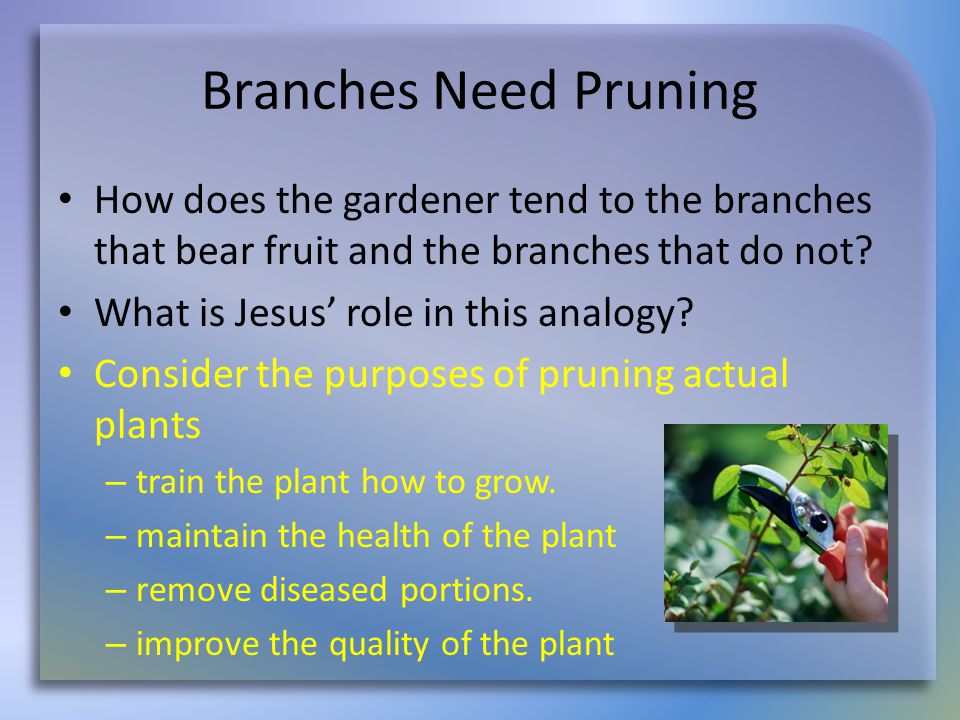 Branches Need Pruning How does the gardener tend to the branches that bear fruit and the branches that do not.
