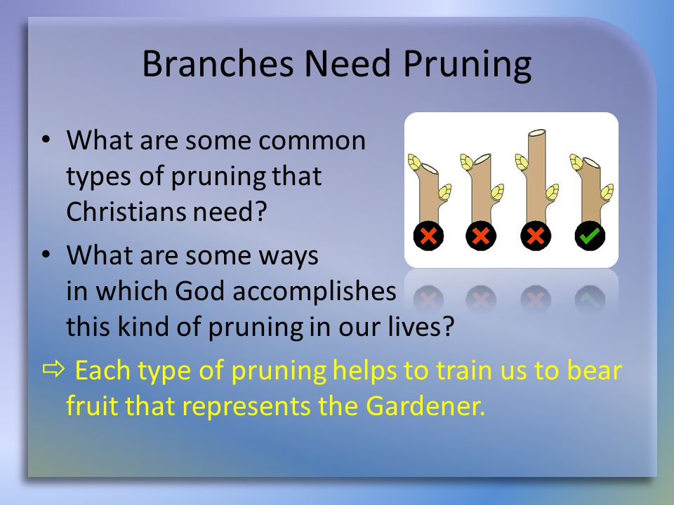 Branches Need Pruning What are some common types of pruning that Christians need? What are some ways in which God accomplishes this kind of pruning in
