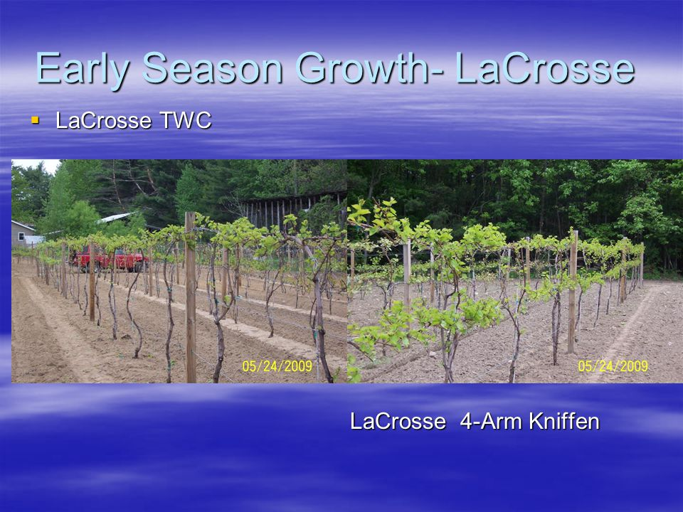 Early Season Growth- LaCrosse  LaCrosse TWC LaCrosse 4-Arm Kniffen LaCrosse 4-Arm Kniffen