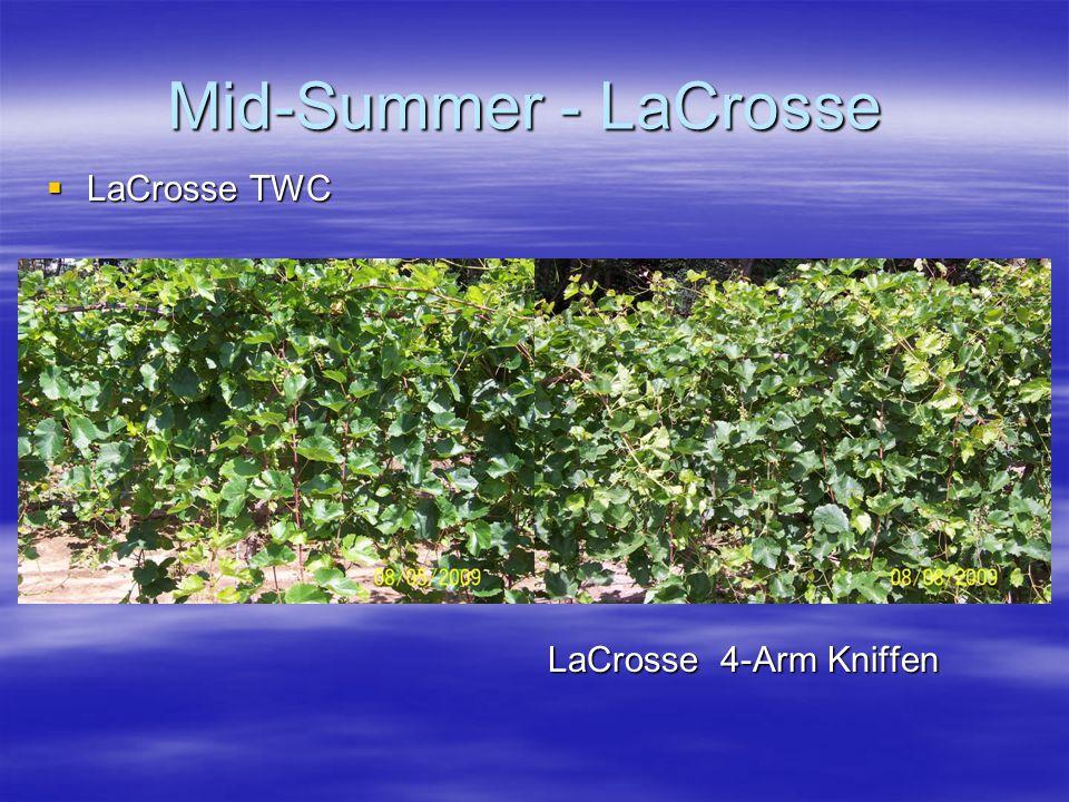 Mid-Summer - LaCrosse  LaCrosse TWC LaCrosse 4-Arm Kniffen LaCrosse 4-Arm Kniffen